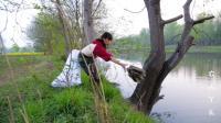 野河放了十来个鱼笼, 今天早上去收, 这收获怎么样