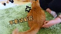 一碰这里猫咪就疯狂, 硬要主人继续拍打, 讨打的叫声萌翻天!