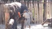 大象: 我爱洗澡, 皮肤好好