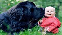 狗狗像个大哥哥一样照顾宝宝, 有没有被暖化, 又骗我, 生宝宝养狗狗!