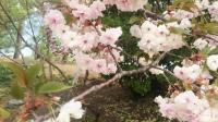 北京朝鲜族老教师协会春游实拍-17
