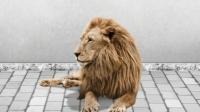 喵星人是如何变成狮子的?