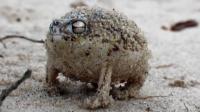 超萌听它的叫声都怀疑它是青蛙了