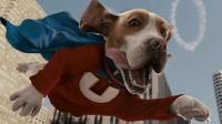 狗狗意外获得超能力, 各项能力逆天, 成功当上了狗中超人!