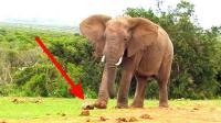 呀, 大象你过分了吭, 乌龟爬的慢你也不能踢它啊
