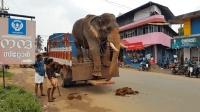 5吨重成年亚洲象下卡车的方式看懵游客, 连轮胎都感觉心里慌慌的!