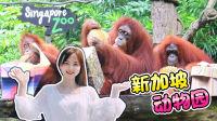 小伶的新加坡之旅第二站新加坡动物园!