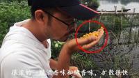 钓鱼时, 用发酵的玉米打窝好吗? 怎样制作