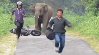男子不小心闯入大象的领地, 激怒了大象, 这下麻烦了