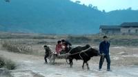 改变国人出行方式的科技发明——畜力和畜力车