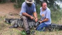 女子遛狗时被鳄鱼拖走 在其腹中找到一条手臂