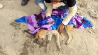 狗狗倒在路边昏迷不醒, 好心印度人及时医治, 让它重新苏醒过来!