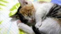 最牛 最可爱 最漂亮 最搞笑 最艺术化的猫咪