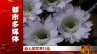仙人球怒放26朵鲜花