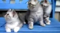 超可爱的三只小猫