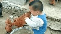 初生牛犊不怕虎说的就是这个孩子吧, 抓到鸡直接想吃