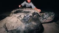 世界上最大的龟 重达将近2000斤 它可以对太阳星星定位?