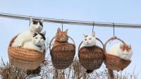 萌到窒息的猫咪, 随便一张都能当屏保, 网友: 好想组团去偷猫