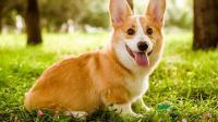 为什么狗狗爱拆家, 却还有那么多人养? 答案没那么简单