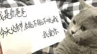谁说猫没感情, 父亲节快乐!