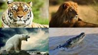 世界最强五大动物排名, 狮子进不了前三, 第一无人不服气!