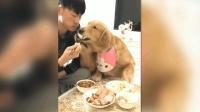 金毛: 你吃什么都行, 敢动肉包子我绝不能忍受!