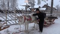 在芬兰的罗瓦涅米 看到了童话中的驯鹿
