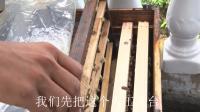 人工育王移虫很重,养蜂专业户告诉你蜜蜂移虫育王的秘密和技巧