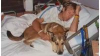 10年前主人癌症卧床,狗狗:别怕,你有我,如今剧情颠倒!