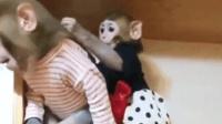 小猴子一直追着哥哥玩, 结果哥哥是各种嫌弃: 你给我起开