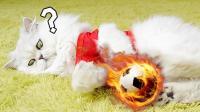 错过了双牙大战? 猫咪实力卖萌, 带你回顾比赛精彩集锦#玩转世界杯#
