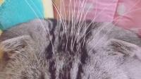 奇葩喵星人: 猫胡子长脑门上? 你确定那不是WIFI信号杆?