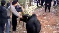 敦操苗族砍牛、砍马