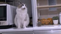 猫咪进厨房准没好事, 动不动就把东西往地上推造反了