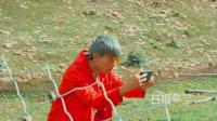 石榴熟了: 养羊大户叨叨重出江湖