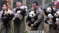 奶爸想抱大熊猫拍照, 可熊猫团子死活不给面子, 还呜呜大哭