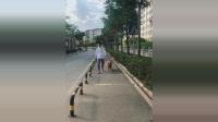主人带金毛在街上散步, 金毛这一举动真是太棒了!