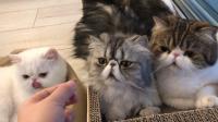 2018第一次家庭会议~#宠物#