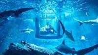 全球最恐怖的客房, 与鲨鱼做邻居, 你敢去吗?