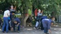 桑葚树遭老人围攻: 一棵树上挂3人扯着树枝吃