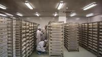 中国造世界最大蚊子工厂, 每周放出300万只蚊子, 多国争相引进!