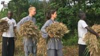 乐开花! 少林女洋弟子农场收麦