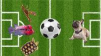 神兽预测世界杯  最后一只奇准无比