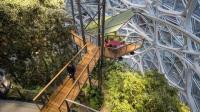 亚马逊办公楼比苹果更牛, 花40亿逗员工开心, 把热带雨林搬了进来
