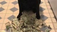"""狗狗总偷偷存钱,如今""""富甲一方"""",主人:幸好没学会用微信!"""