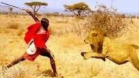 马赛人狮口夺食, 狮王不敢反抗, 狮子: 等我叫兄弟来, 有种你别跑!
