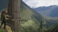 参天大树是怎么锯倒的? 一把电锯一把斧头, 看老外如何操作