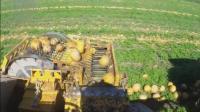 收南瓜的机器这么牛, 原来他们种南瓜只要瓜子