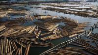 大型木材厂实拍, 这里的木头堆积如山, 最后都被切割成木料