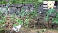 两只猫咪在自家院子里散步, 实在是太可爱啦!